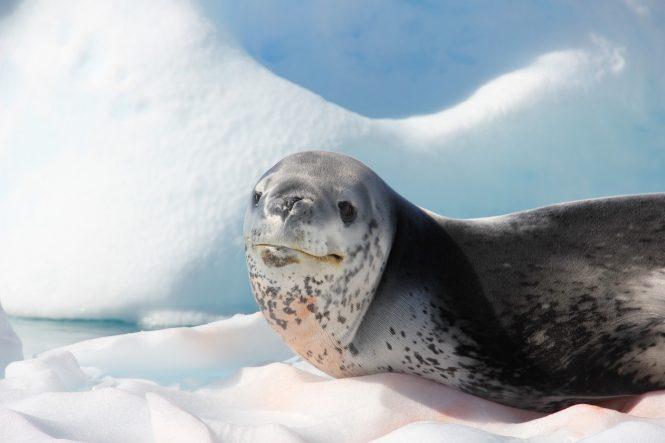 Amazing wildlife awaiting to be discovered on Antarctica yacht charter with Legend - Photo © Nicolas Benazeth : CharterWorld.com