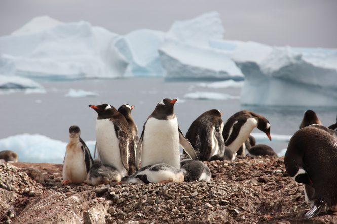 Penguins in Antarctica - Photo © Nicolas Benazeth : CharterWorld.com
