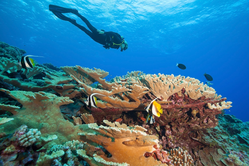 French Polynesia diving